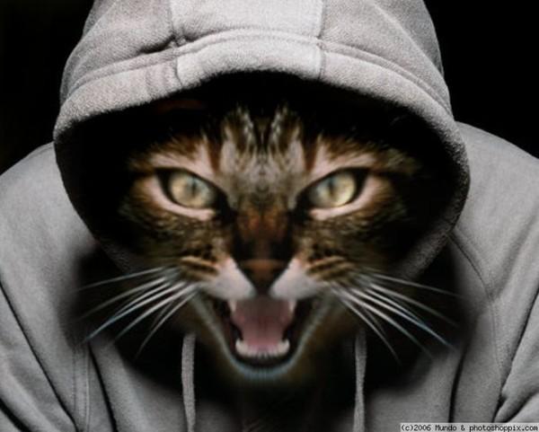 Надписью тихого, смешная картинка кота перепутали с капюшоном была часто в вк