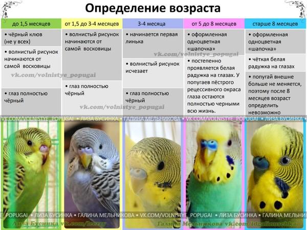 Волнистые попугаи температура содержания