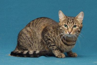 Коты окраса табби фото