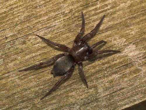 Как убить ядовитого паука - wikiHow