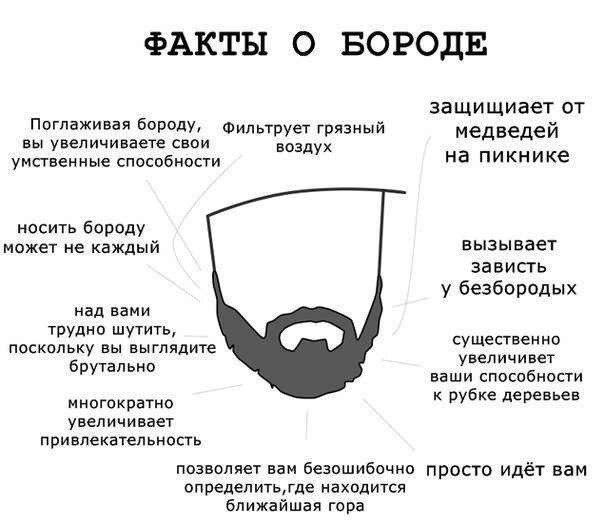 Интересные факты о бороде  Приколы на XAXAORG Тысячи