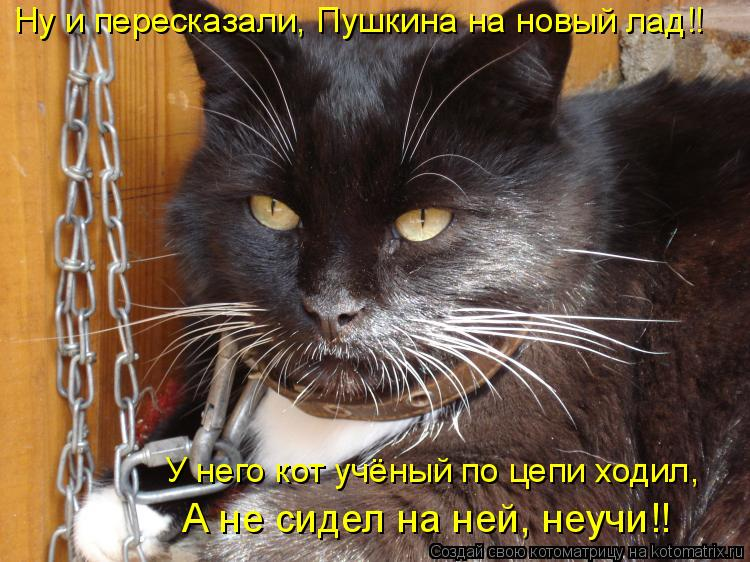 Картинки кота с цепями