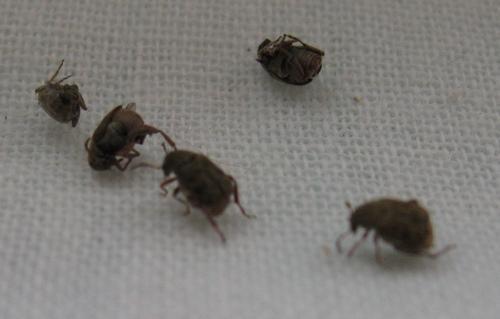 ползут жуки из подвала в квартире документы, многофункциональный центр