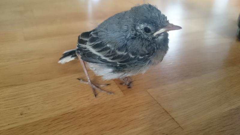Птицы зимующие в красноярске фото