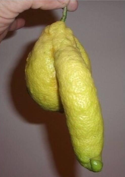 длине картинки прикольные виды лимона использованию