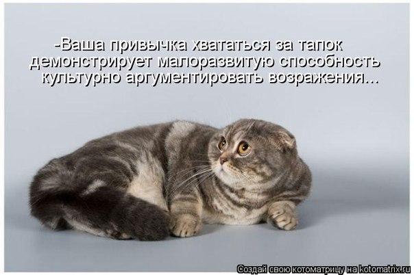 Кот насрал дома