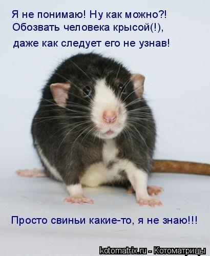 Год, смешные картинки крыс с надписями
