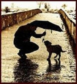 Кто под проливным дождём не намочит волосы ответ