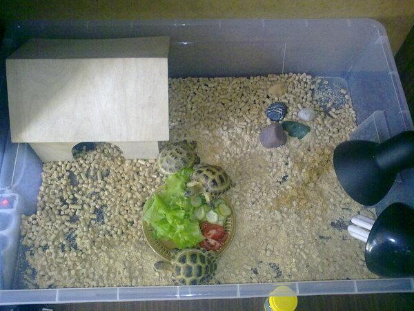 Как сделать черепахе домик 958