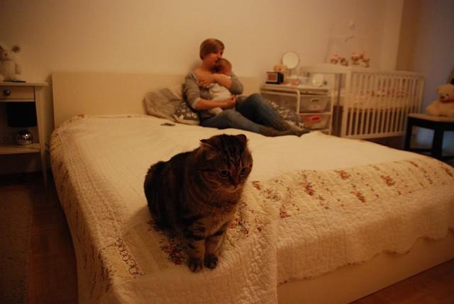 Отношения с мужчиной котом
