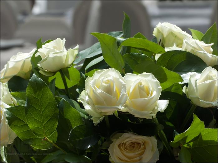 Желтые розы к чему дарят девушке