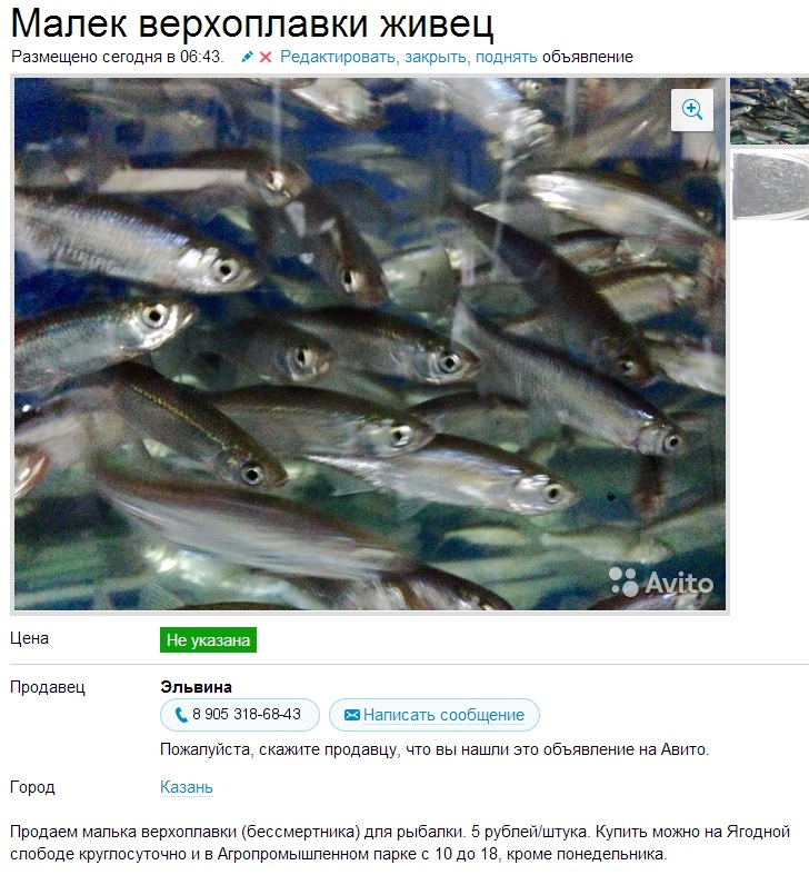 Продажа живца для рыбалки в красноярске