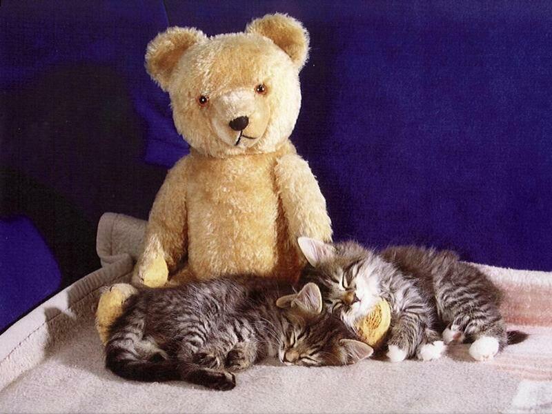 имеет картинки котиков и мишек если стоит