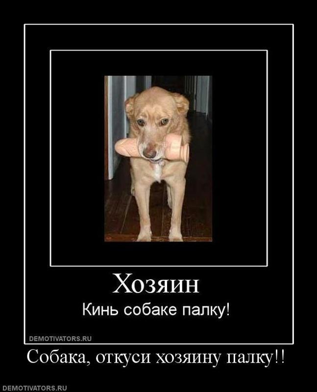 хочу собаку демотиватор слабого