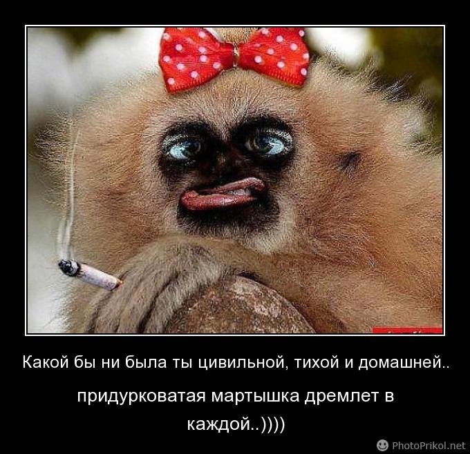 Картинки обезьян смешные с надписями