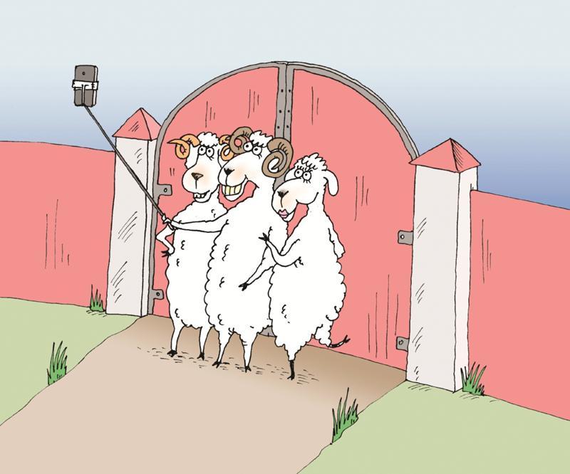 картинка бараны в ворота самый смешной