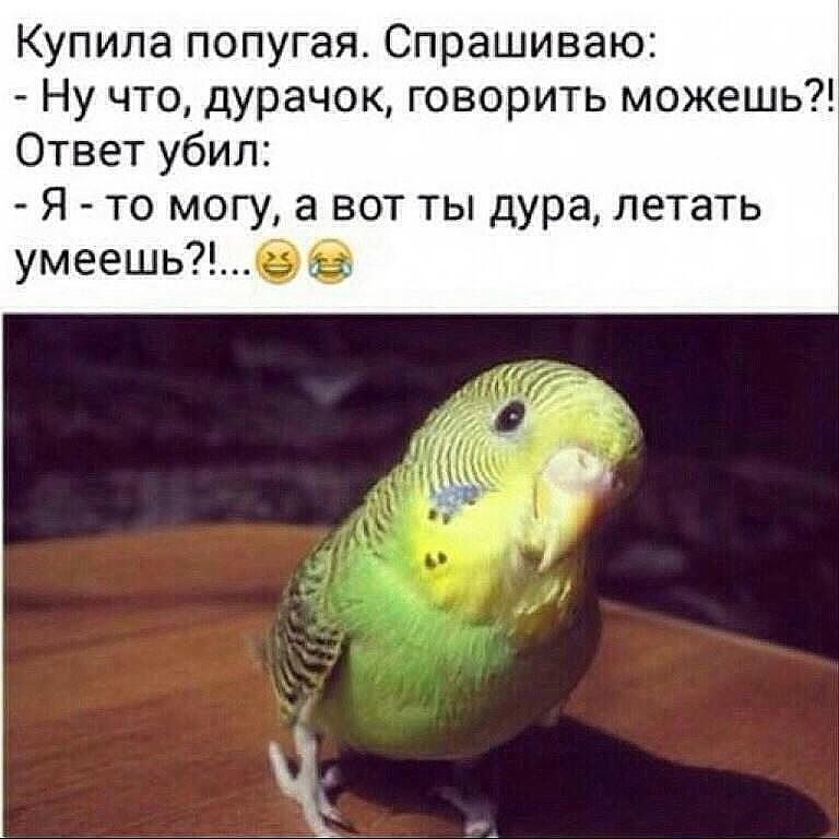 https://otvet.imgsmail.ru/download/17823050_42d9473207087dd59f0f2854f5e533a5_800.jpg