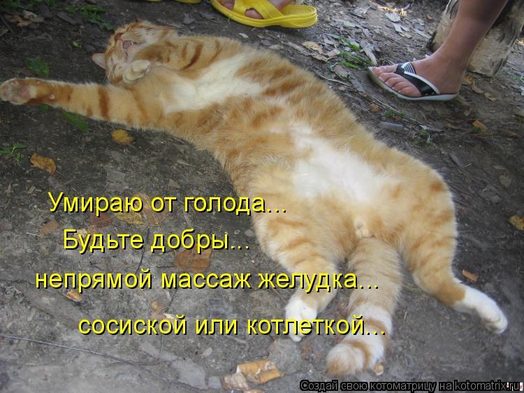 что картинка ты умрешь кот много