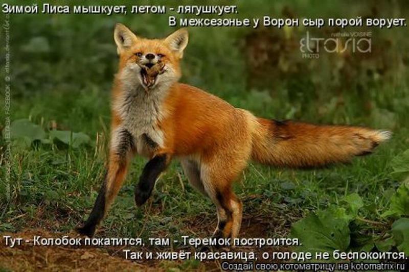 Прикольные картинки про лис с надписями