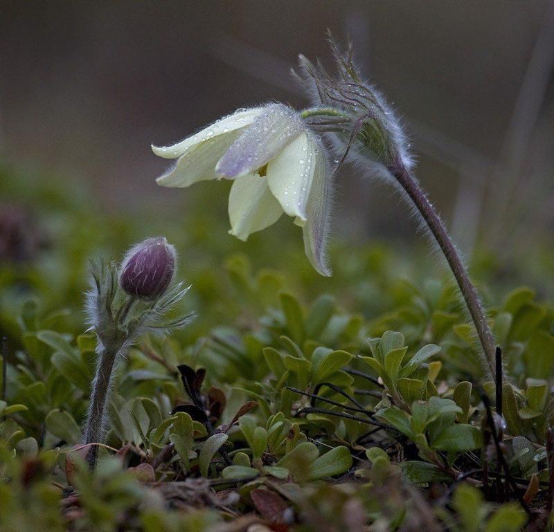 природа якутии весна фото