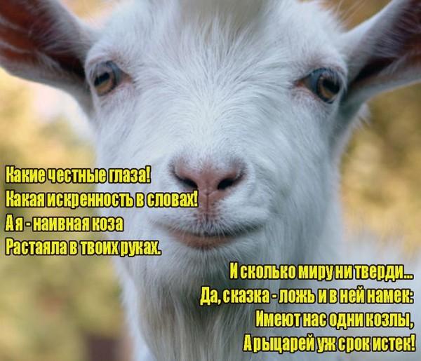шуточные поздравления про козу все
