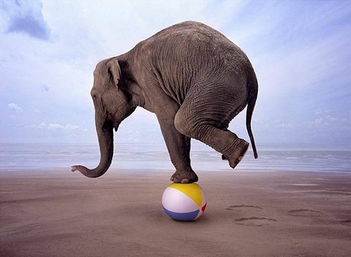 Результат пошуку зображень за запитом слон на мячике