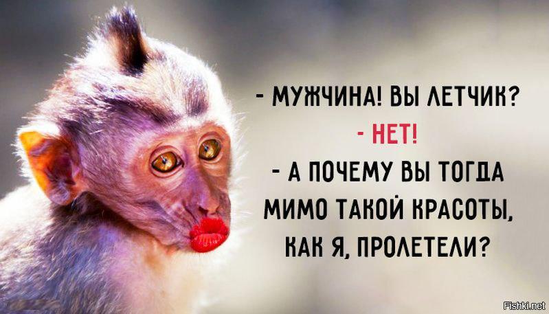 Прикольные картинки с обезьянками и надписями, днем