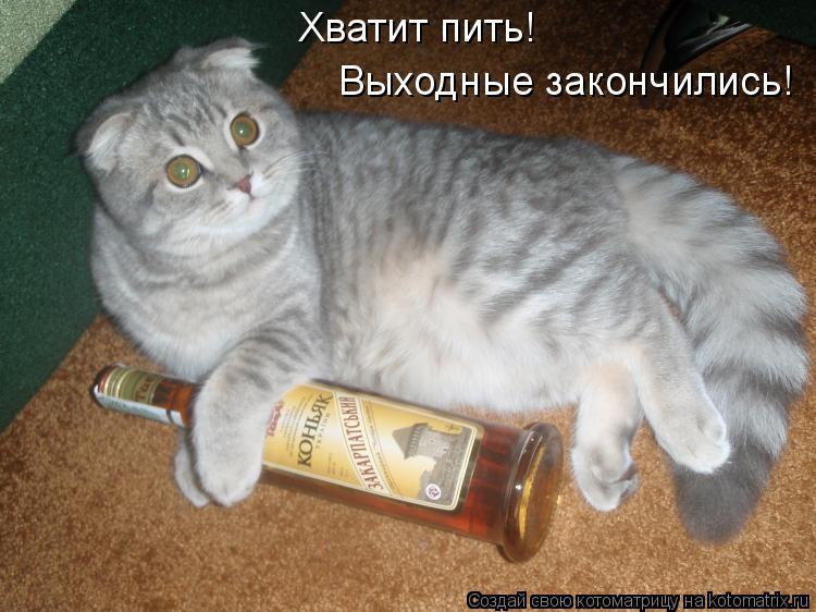 Картинка не можешь пить грызи