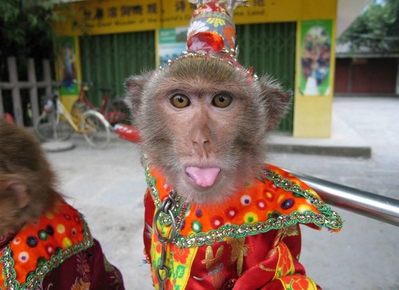 Смешные картинки обезьян накрашенных