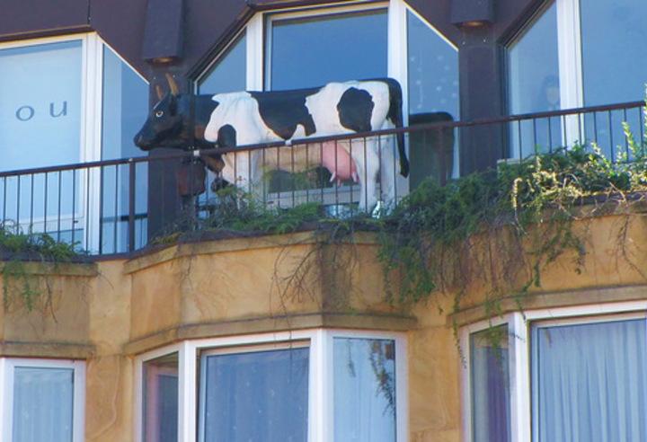 Ответы@mail.ru: а на балконе лучше всего какую скатину держа.