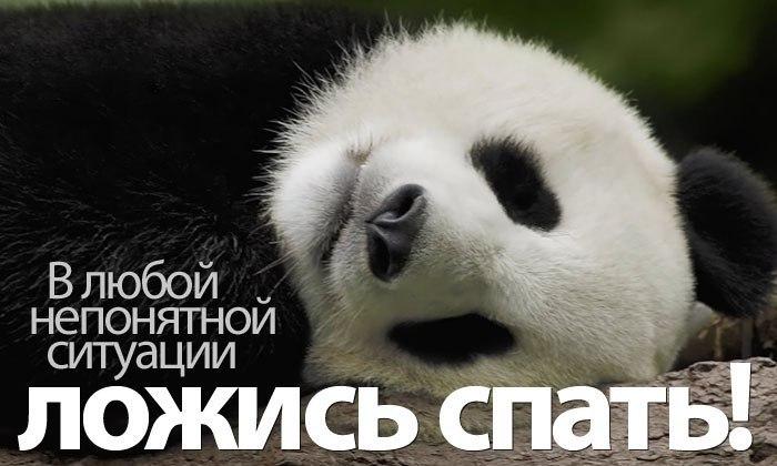https://otvet.imgsmail.ru/download/179646396_d0b08c98294dad4555901488bb0899e4_800.jpg