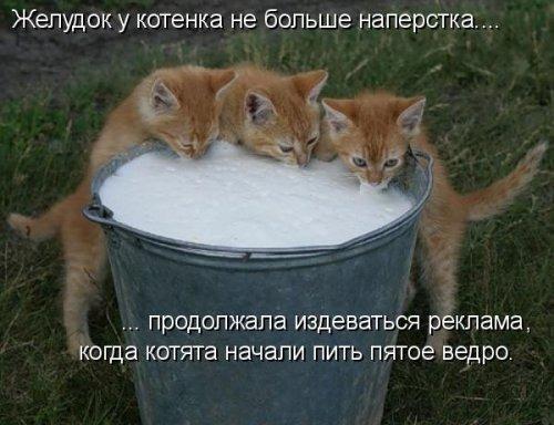 Котам нельзя давать