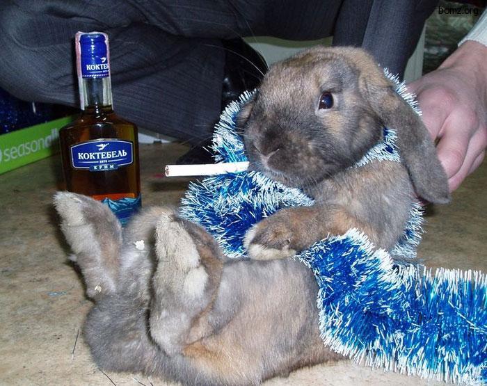 Для аватарки, прикольные картинки зайцев с надписями