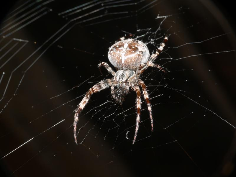 купите качественны как узнать по фото что за паук днем рождения мужчине