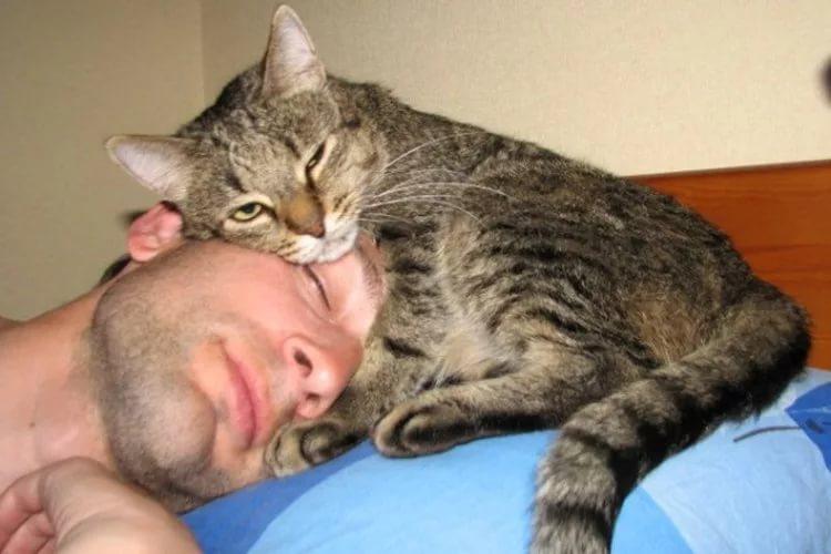 зачем кошка ложится на руку клинику