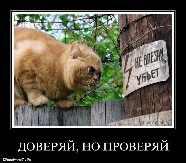 https://otvet.imgsmail.ru/download/181834208_f8ca27e95a24bc942752a5102b84bf1b_800.jpg
