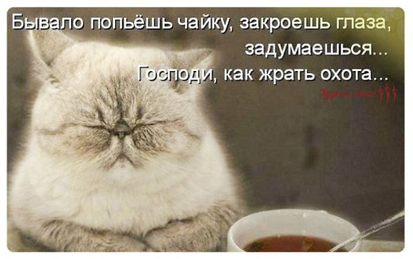 Попугай кеша картинки кота поговорим