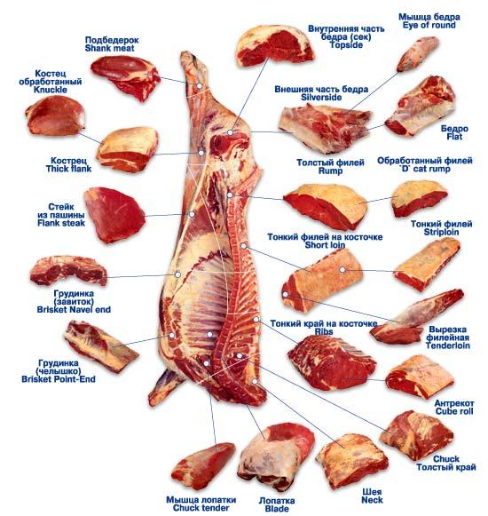 лице Айшварии в чем причина плохой перивариваемости мяса недостаточность нижних конечностей