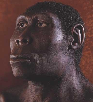 homo erectus человек прямоходящий