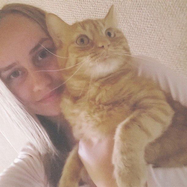 Британский кот не метит