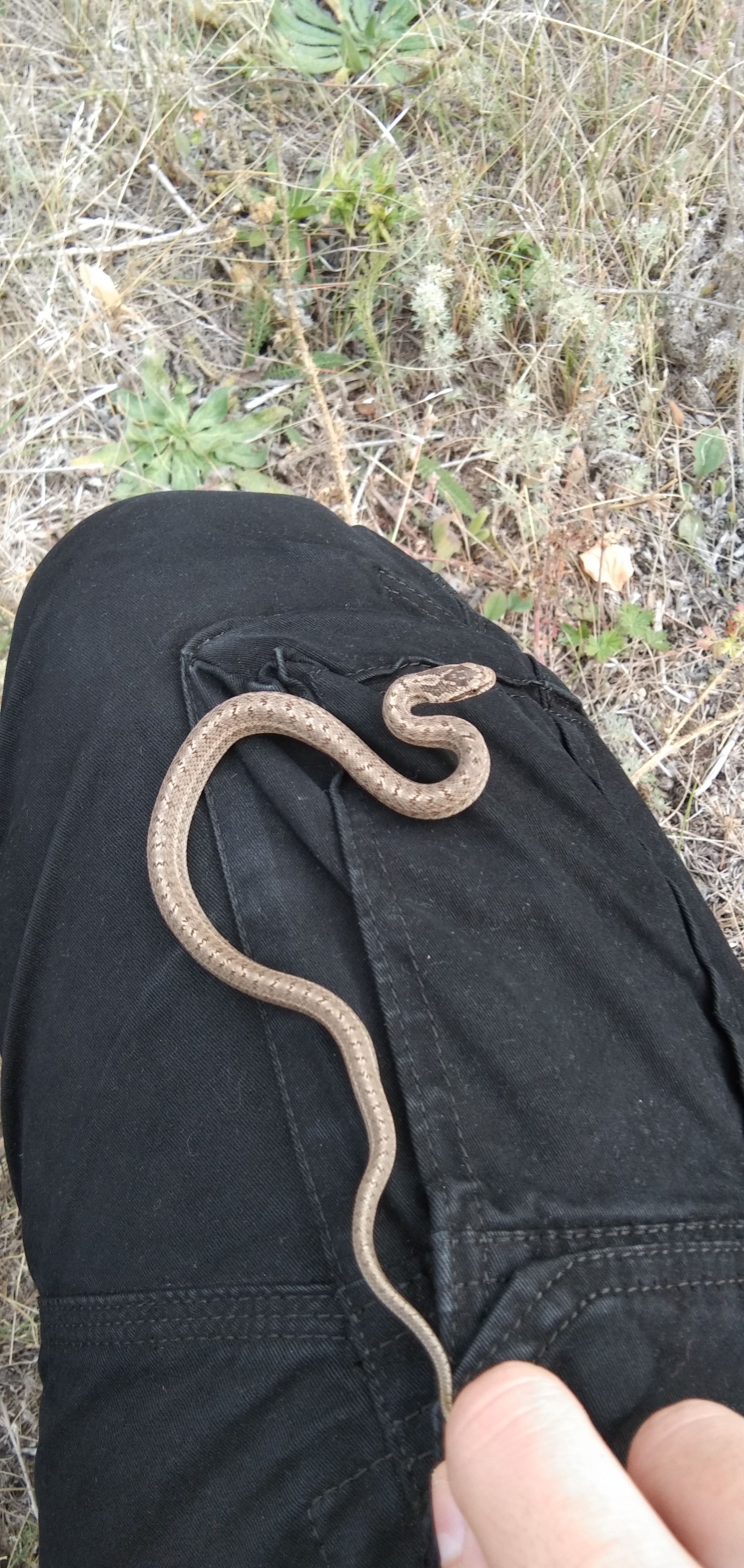 фотографии змей в саратовской области сегодня вас