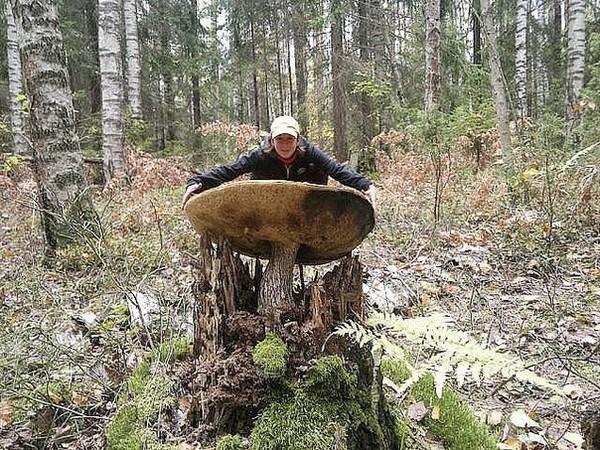 все в чите где можно собирать грибыуже больше