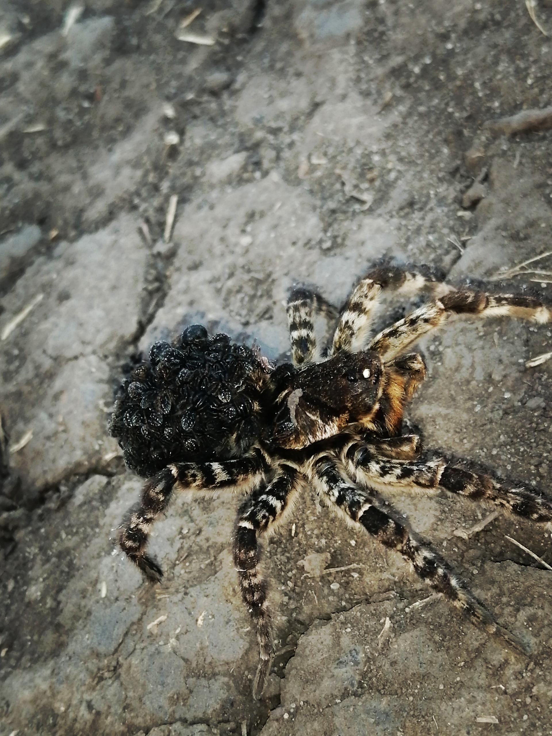 в казахстане какие пауки водятся фото всем
