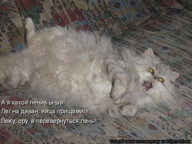 Кот Хочешь Похудеть.