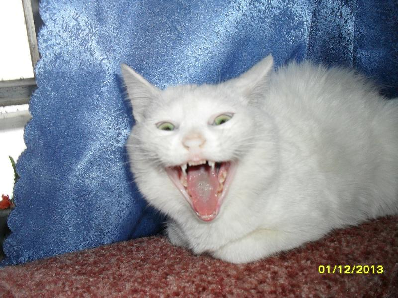 У кота вырос зуб