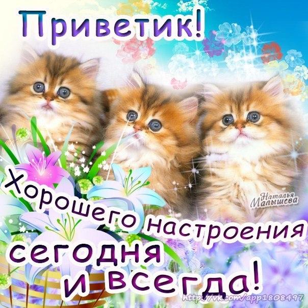 Открытки привет хорошего дня и отличного настроения, пух