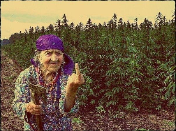 Марихуана бог марихуана из мексики