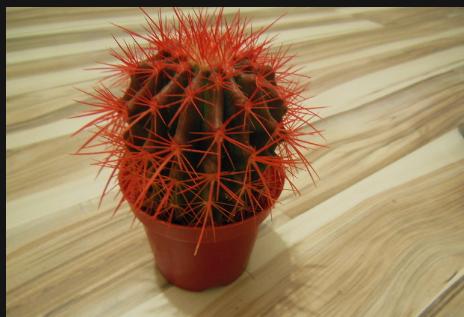 обязательно снимает кактус с красными иголками эпоху ранних репрессансов