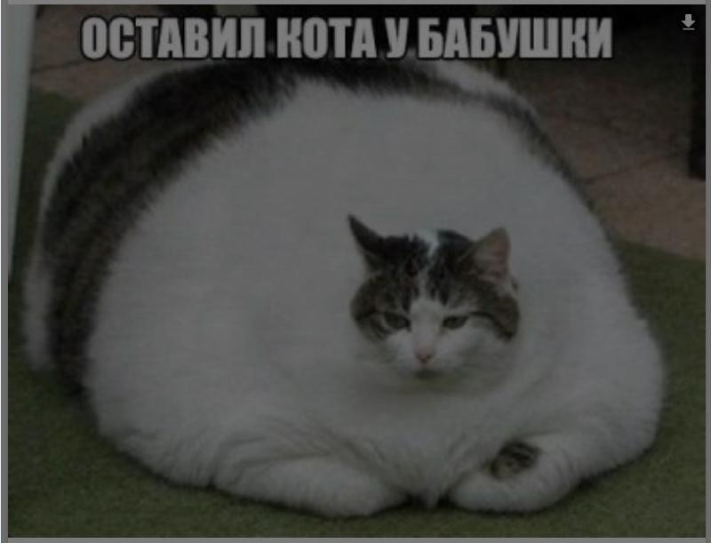 Крови кошка сне снится к во чему в