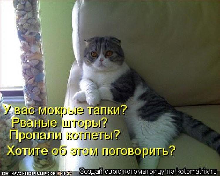 Смешные картинки и анекдоты про кошек, роднульке